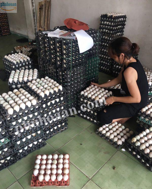 Khay trứng bằng nhựa 30 quả